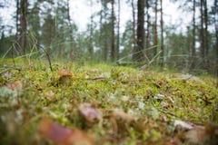 Champinjonvit i skogen Royaltyfria Foton