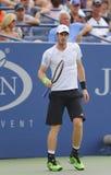 Champion Andy Murray de Grand Chelem pendant le match 3 rond de l'US Open 2014 Photo libre de droits
