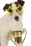 Champion dog Royalty Free Stock Image
