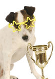 Champion dog Stock Photography