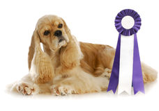 Champion dog Stock Photo