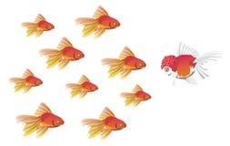 Champion Fish Royalty Free Stock Image
