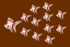 Champion Fish Stock Image