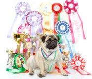 Champion winning dog Royalty Free Stock Photos