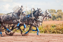 Free Championship Of Russia Russian Troika Royalty Free Stock Image - 55968356