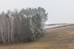 Champs accidentés givrés de vue de campagne avec des arbres Images stock