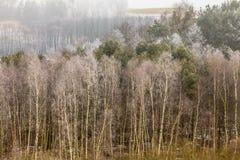 Champs accidentés givrés de vue de campagne avec des arbres Photo stock