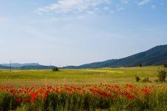 Champs agricoles de pavot rouge et d'herbe verte avec des colonnes de courant électrique près des montagnes en Croatie Photo libre de droits
