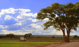 Champs croissants du Nouveau Mexique Images libres de droits