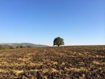 Champs d'agriculteur, arbre isolé Photos stock