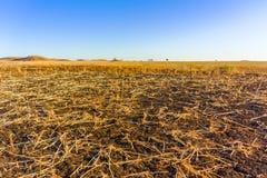 Champs d'agriculteurs au Soudan Images stock