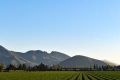 Champs d'agriculture devant des montagnes photos libres de droits