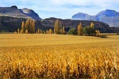 Champs d'automne avec des arbres et des montagnes Photos libres de droits