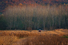Champs d'automne en Roumanie Photographie stock libre de droits