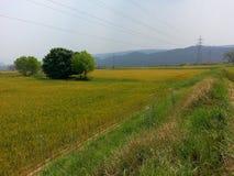 Champs de blé Photo stock