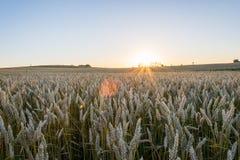 Champs de blé Image stock