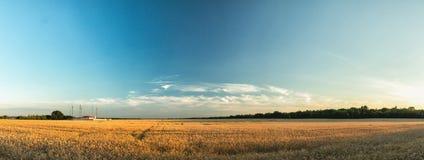 Champs de blé agricoles de panorama Images stock