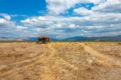 Champs de blé et hutte de producteur près de la ville turque d'Amasya image stock