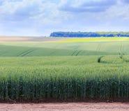 Champs de blé verts Ciel bleu avec des cumulus Summe magique photo libre de droits