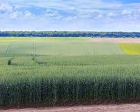 Champs de blé verts Ciel bleu avec des cumulus Summe magique images libres de droits