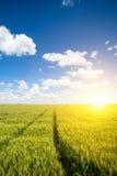 Champs de blé Image libre de droits