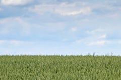 Champs de campagne d'été Paysage éloigné de champs Photo libre de droits