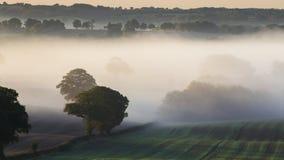 Champs de campagne en brouillard automnal de matin banque de vidéos