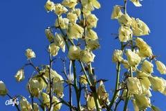 Champs de jaune avec la chaleur australienne profonde photo libre de droits