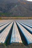 Champs de la Californie cultivant des fraises Image stock