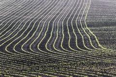 Champs de maïs de l'Iowa Images libres de droits