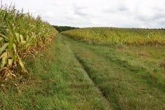 Champs de maïs néerlandais Photographie stock libre de droits
