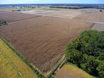 Champs de maïs et ferme épuisés Image libre de droits