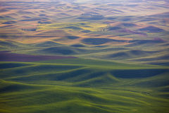 Champs de Palouse Images stock