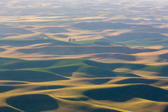 Champs de Palouse Photos stock