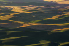 Champs de Palouse Photographie stock libre de droits