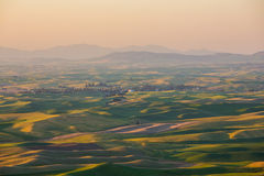 Champs de Palouse Photo libre de droits