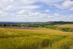 Champs de patchwork et flancs de coteau de roulement dans l'été photographie stock