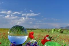 Champs de pavot, fleurs et quartz en cristal Image stock