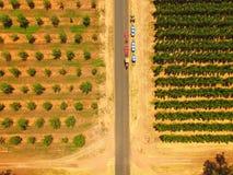 Champs de pommiers Image libre de droits