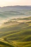 Champs de roulement avec le brouillard image libre de droits