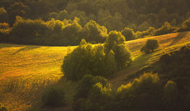 Champs de soirée avec des arbres Images stock
