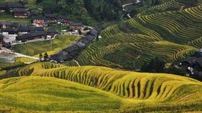Champs de terrasses chez Longji Images stock