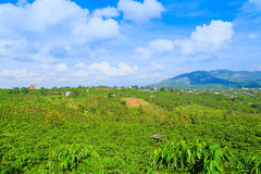 Champs de thé chez le Vietnam images libres de droits