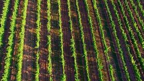 Champs de vignoble en Europe banque de vidéos