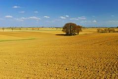 champs des fields χρυσό λ Στοκ Εικόνες