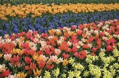 Champs des fleurs Photo stock