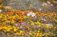Champs des fleurs Images libres de droits