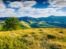 Champs des fleurs blanches de floraison dans les montagnes d'été Photos stock