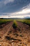 Champs des vignobles au coucher du soleil dans Cariñena, ³ n, Espagne d'Aragà Photo stock