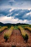 Champs des vignobles au coucher du soleil dans Cariñena, ³ n, Espagne d'Aragà Photographie stock libre de droits